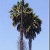 Чим славен штат Каліфорнія