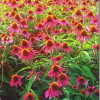 Квітка-полуничка