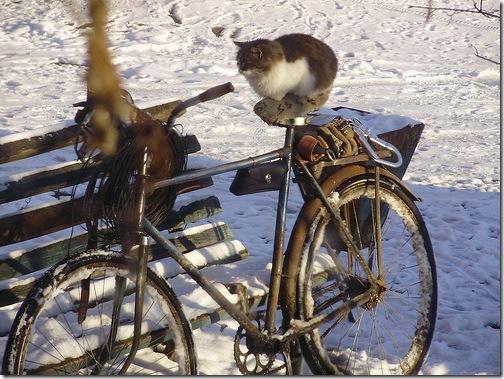 Кіт на велосипеді