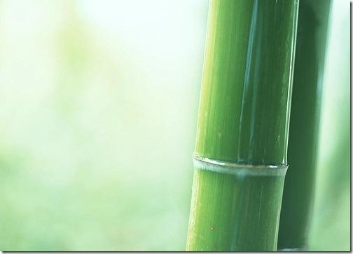 Стебло бамбуку