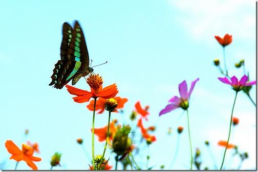 Метелик та квітка