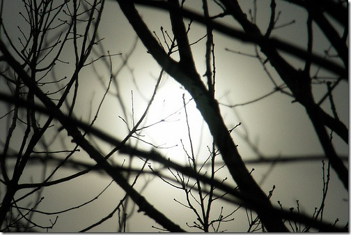 Сонце в бруньках