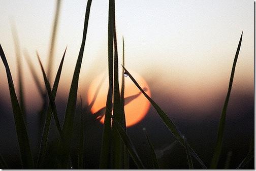 Сонце у траві