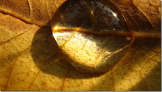 Pulen-blog - Краплина золота