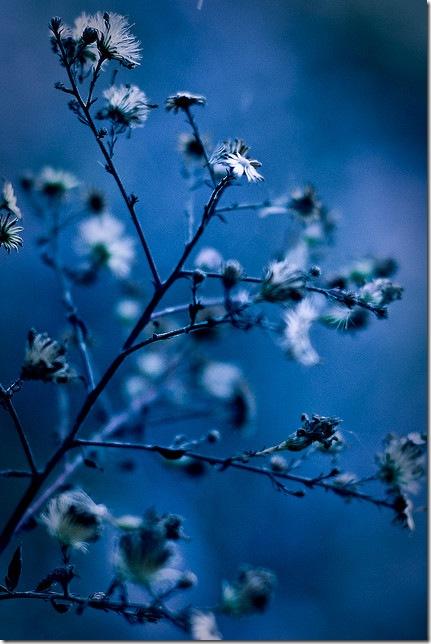 Дощова синь