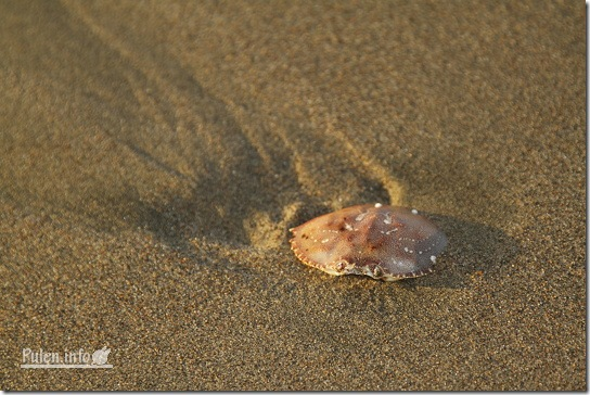 Pulen.info - Crab shell in the sand