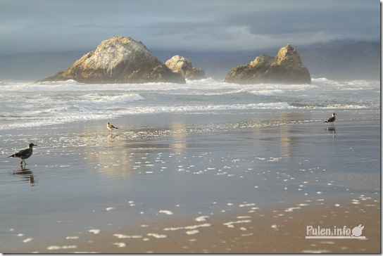 Evening beach with two rocks in water and seagulls 2