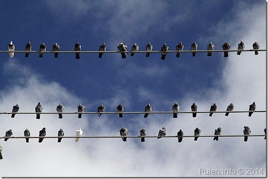 Birds on a wire 1
