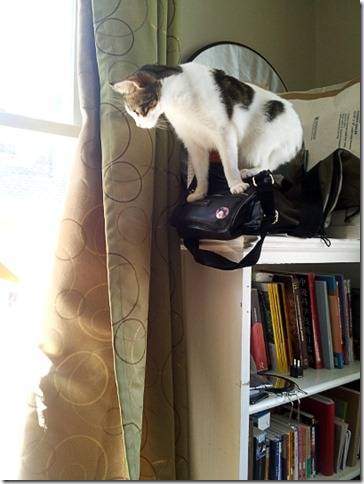 Cat on a bookcase