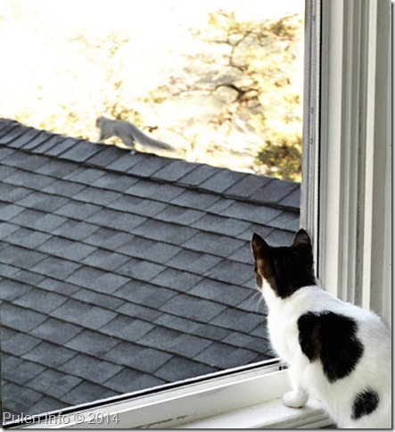 Cat watches squirrel