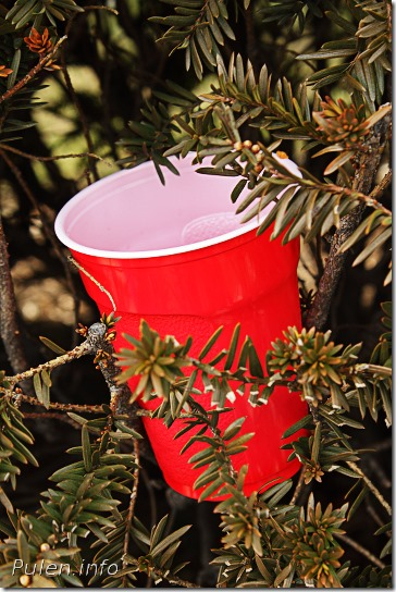 Cola cup in a bush  - Pulen.info