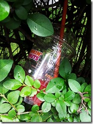 Plastic cup in a bush 1