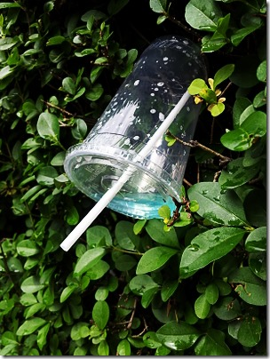 Plastic cup in a bush 3