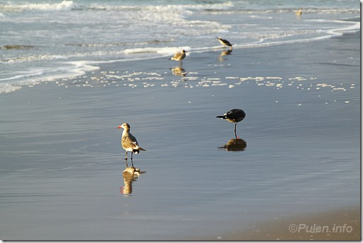 Seagulls on the evening beach 3