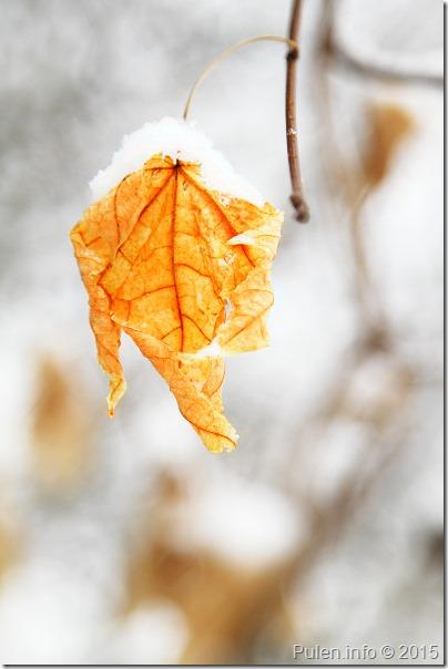 Winter dream 3